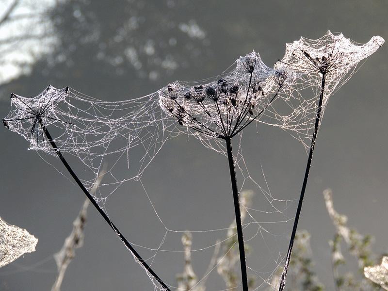 Flora-cobwebs-rnm