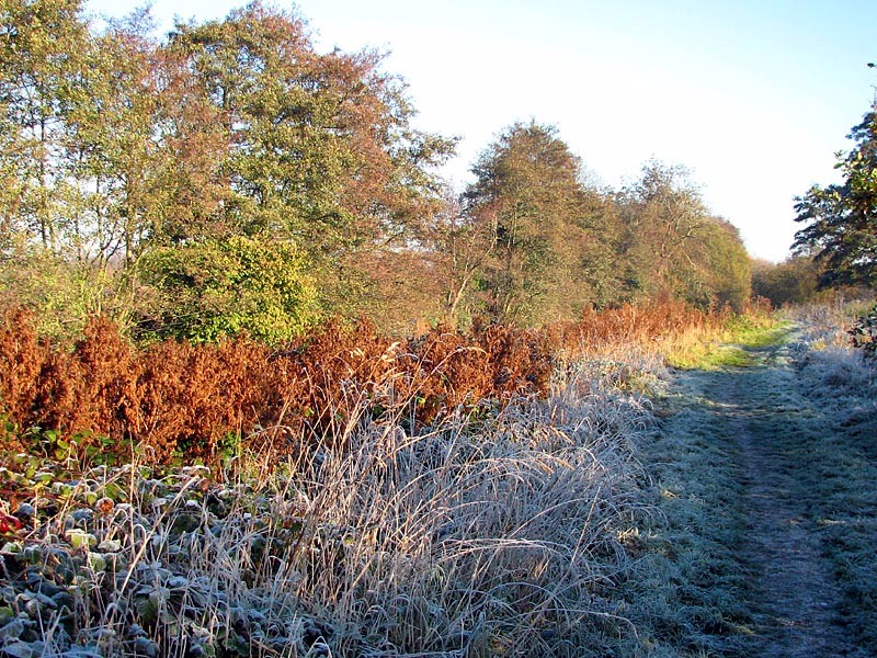 Sites-loddon-path-winter-rr