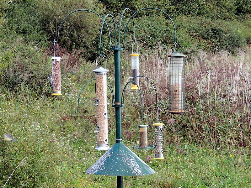 Walks-lfgp-feeder-stand