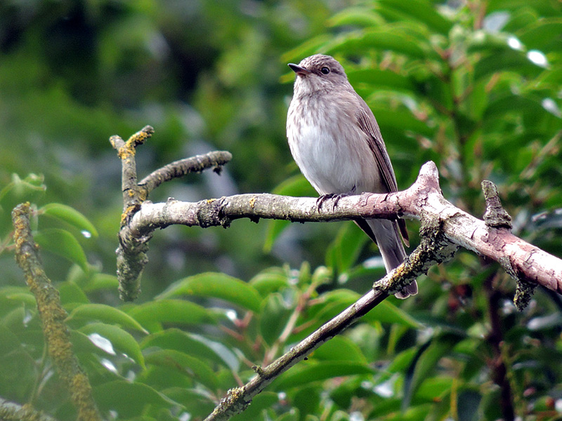 Birds-spotted-fly-rm